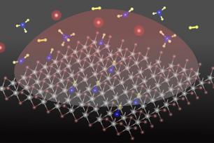 Add a Carbon Atom to Transform 2D TMD Materials