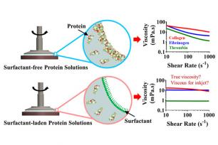 Fibrous protein finding
